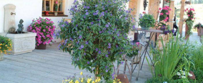 Sonnenalm Blumenpracht