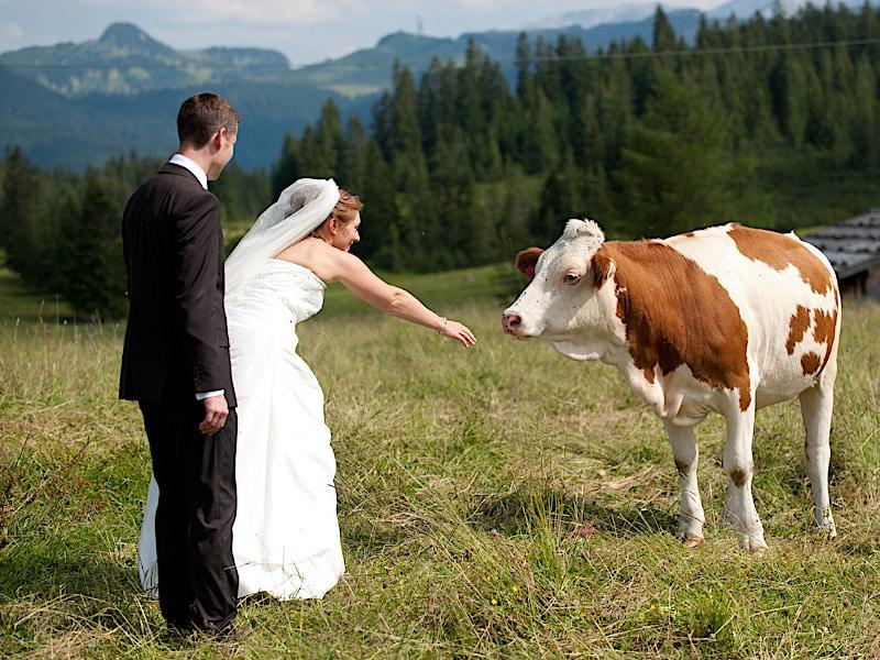Veranstaltungen - Brautpaar mit Kuh