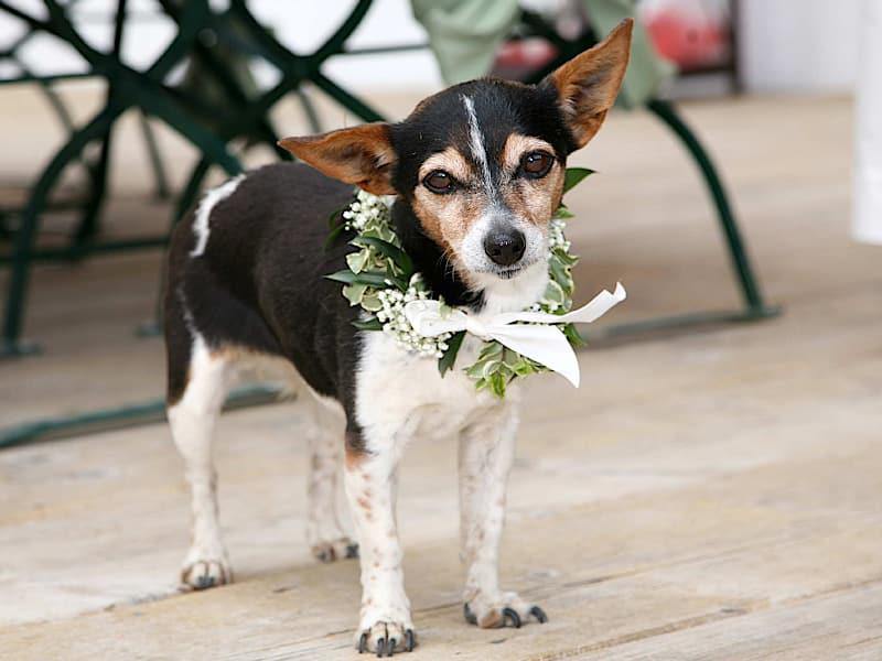 Veranstaltungen - Hund als Trauzeuge