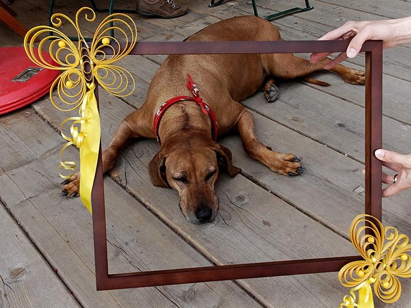 Urlaub mit Hund - Sonnenalm Winklmoos