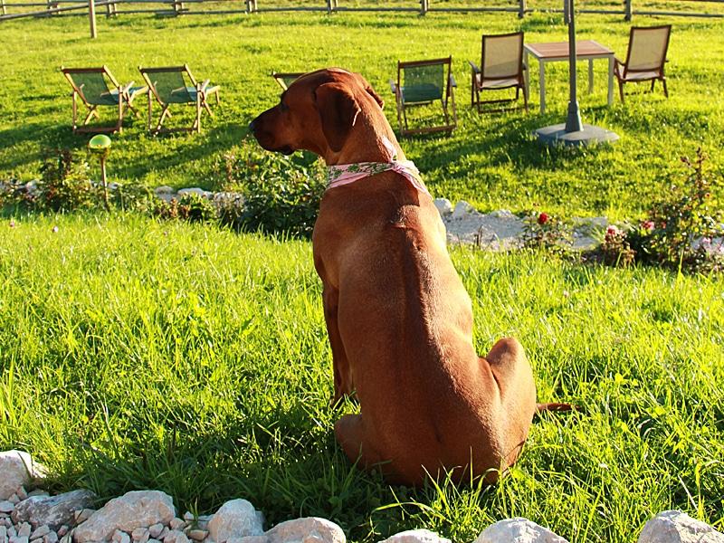Urlaub mit Hund - Ridgeback