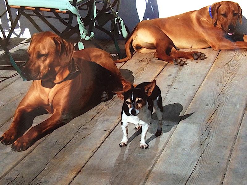 Urlaub mit Hunden - Sonnenalm Winklmoos