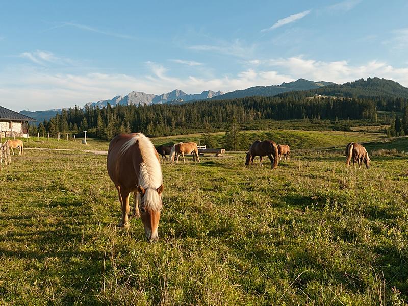 Urlaub mit Kindern - Pferde auf der Sonnenalm