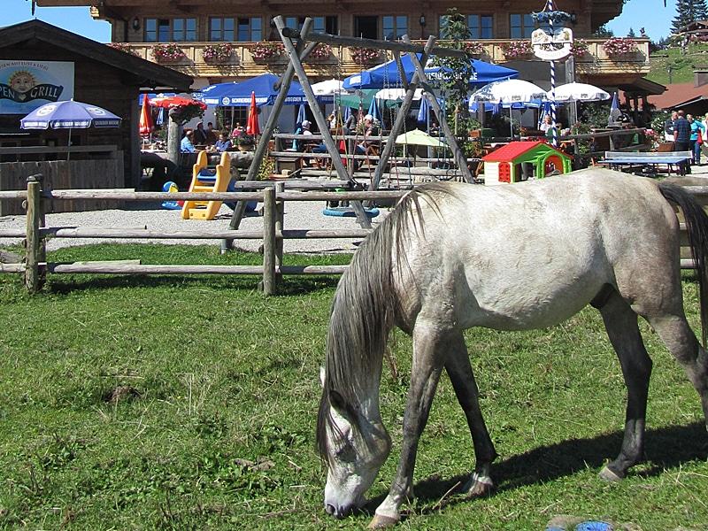 Urlaub mit Kindern - Spielplatz mit Pferd