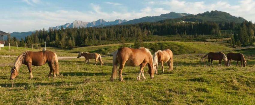 Aktivitäten Sommer - Pferde auf der Wiese