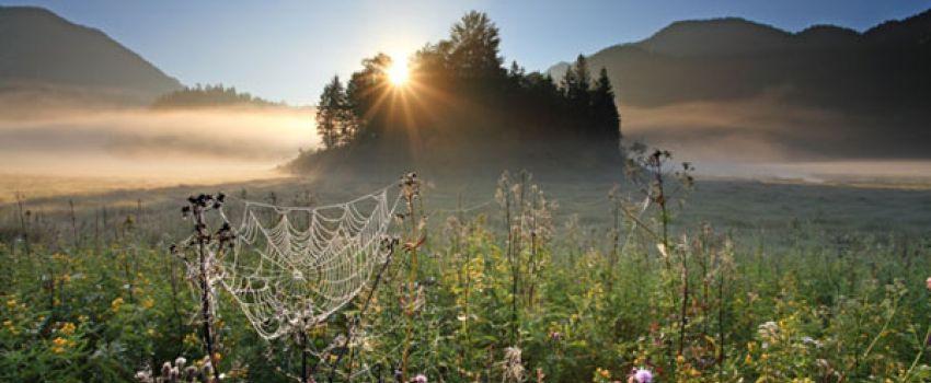 Aktivitäten Sommer - Sonnenuntergang und Spinnennetz