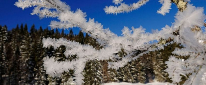 Aktivitäten Winter - vereister Ast